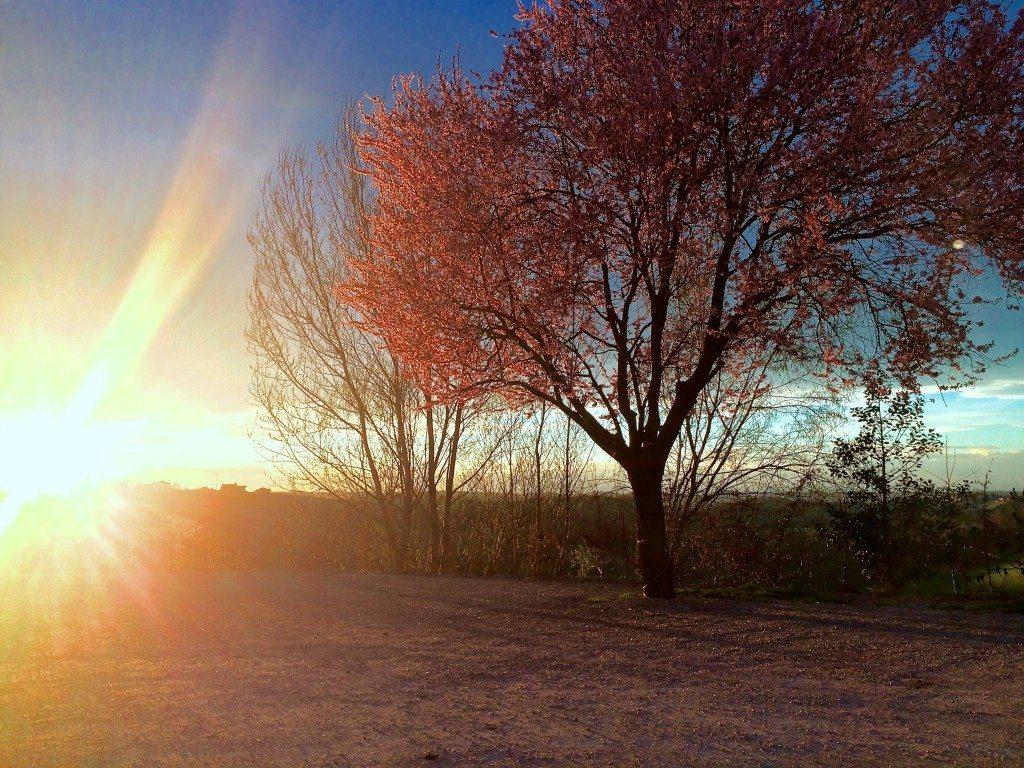 tramonto langhe roero