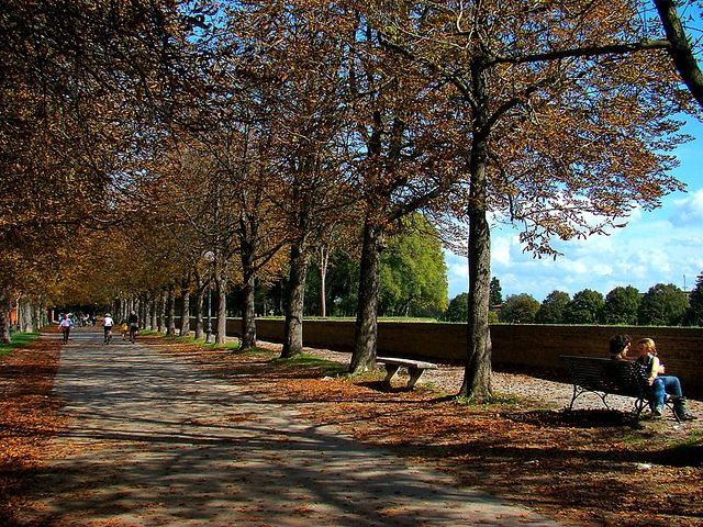 gita autunno parco foglie