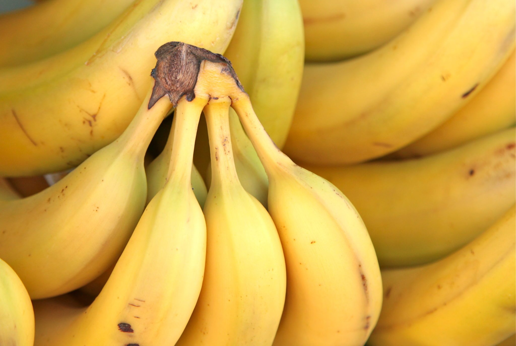spreco-alimentare-torbakhopper-going-bananas
