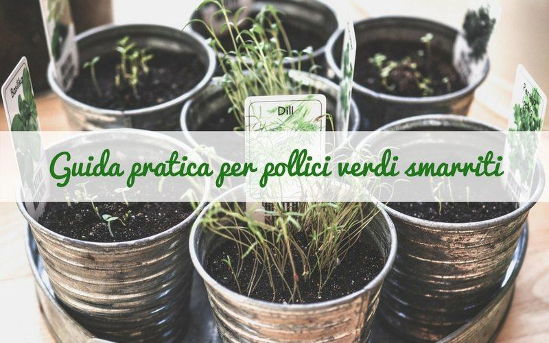 Le erbe aromatiche: guida pratica per pollici verdi smarriti