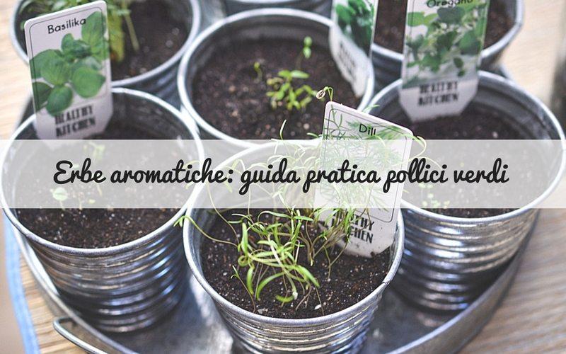 Le erbe aromatiche: guida pratica per pollici verdi – vol.2