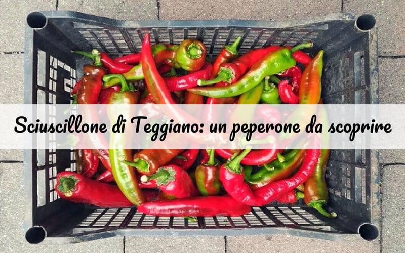 Lo Sciuscillone di Teggiano: un peperone dolce italiano… da scoprire