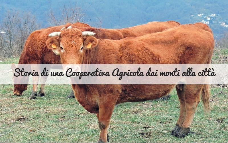 cooperativa agricola _Spadelliamo